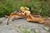 Enchanted Story Fairy Garden Sleeping Fairy Baby with Kitty Outdoor Statue  - 4140