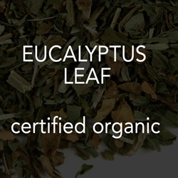 Eucalyptus Leaf *co