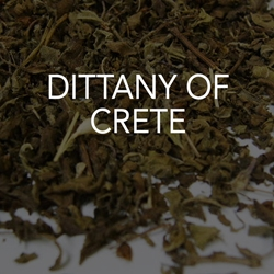 Dittany of Crete