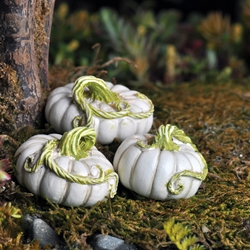 Fairy Garden  White Pumpkins